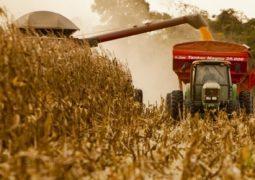 Volume exportado de milho em queda em 2017