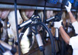 Entressafra do leite traz expectativa de aumento no preço do alimento em Minas Gerais