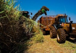 Cana-de-açúcar irá colher mais de 616 milhões de toneladas