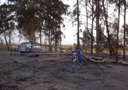 Eucaliptos pegam fogo e deixam estudantes de São Gotardo parados na BR rumo a Patos de Minas
