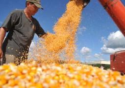 Alta nos preços na Bolsa de Chicago e câmbio favorável reaquecem mercado de soja e milho