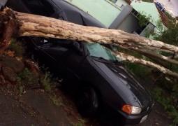 Árvore tomba em cima de carro em São Gotardo