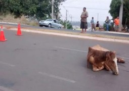 Motocicleta é surpreendida por égua e bate em Patos de Minas