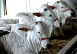 Nutrição aumenta rentabilidade na cria de bovinos de corte