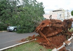 Árvore tomba e deixa carro destruído em Patos de Minas