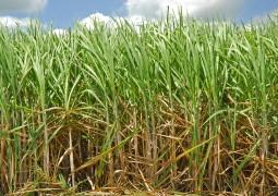 Produção de cana em MG já representa 93% do total estimado para a safra