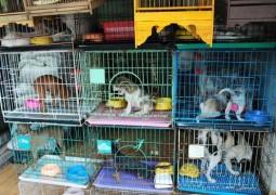 Venda de animais em Pets Shop está proibida em todo o Brasil