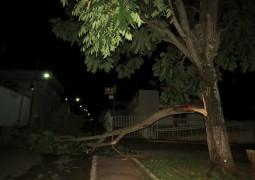 Após mais de 20 dias, chuva finalmente cai em São Gotardo e árvore tomba próxima ao Correio