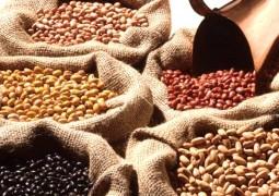 Produção de feijão deve chegar a 3,4 milhões de toneladas este ano