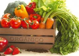 Número de produtores orgânicos cresce 34% em um ano