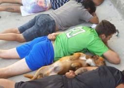 Cachorro deita no chão junto com suspeitos durante abordagem policial e rouba a cena em operação