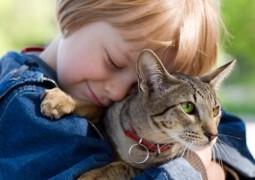 Crianças criadas com gatos podem ter esquizofrenia no futuro, afirma pesquisa polêmica