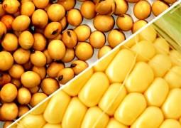 Estudo inédito da CNT aponta Entraves Logísticos ao Escoamento de Soja e Milho