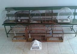 Polícia Ambiental faz apreensão de vários pássaros da fauna brasileira em Tiros