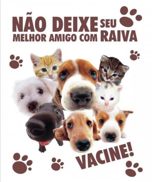 Image Result For Vacinacao Antirrabica