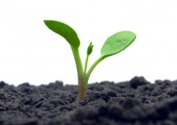 Chuvas fortes podem causar perdas de nutrientes do solo em áreas agrícolas