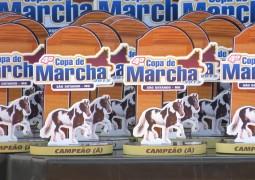 4ª Copa de Marcha é realizada em São Gotardo e reúne animais e haras de toda a região do Alto Paranaíba e Triângulo Mineiro