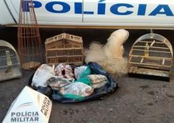 Homem é preso com pássaros, pescado e armadilhas em São Gotardo
