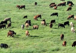 Pecuária: terra deixou de ser o valor mais importante na produtividade, diz GTPS