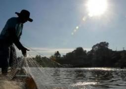 Pescados serão a próxima proteína animal a alimentar o mundo, segundo ONU
