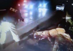 Policia Rodoviária Federal lança nota de esclarecimento sobre execução de animal atropelado na BR 365