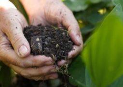 Entregas de fertilizantes batem recorde no Brasil em agosto, diz Anda