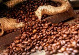 Café: Cotações do arábica iniciam a semana em alta no Brasil