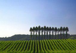 Agricultura aprova incentivo a proprietário rural por reposição florestal