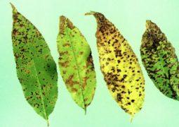 A importância do silício no desenvolvimento vegetal