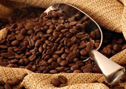 Câmara de Comércio Brasil-Canadá promove o café especial brasileiro no Canadá