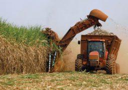Produtividade de cana tem queda de 9,8% em setembro, segundo UNICA