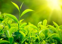 Silício: saiba como esse nutriente atua no manejo de estresses ambientais e patogênicos