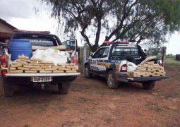 Polícia Militar realiza apreensão de 300 quilos de maconha em fazenda no Alto Paranaíba