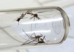 Municípios passam a ser obrigados a fazer levantamento de infestação por Aedes Aegypti