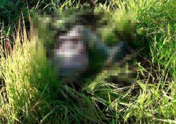 Ciclista é encontrado morto na BR-354 e motorista responsável por acidente se apresenta à Polícia