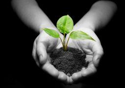 Conheça o Alpha: um produto natural desenvolvido pela Verde para proteção vegetal