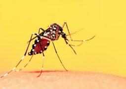 Ministério analisa incluir vacina da febre amarela para crianças no calendário