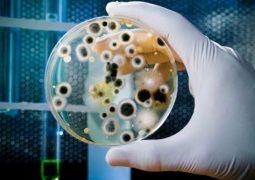 OMS pede o desenvolvimento de novos antibióticos para 12 'superbactérias'