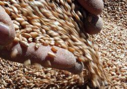 Trigo: Alta no preço do grão é repassada às farinhas