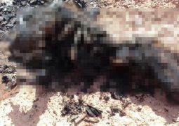 Corpo carbonizado é encontrado em estrada vicinal próximo a BR-354