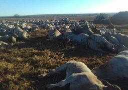 Após morte de bois, exames confirmam que botulismo é causa da morte de animais