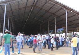 Fenacampo e Exphomig são realizadas com exposição de gado holandês inédita em São Gotardo
