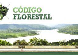 STF inicia julgamento de ações sobre o novo Código Florestal
