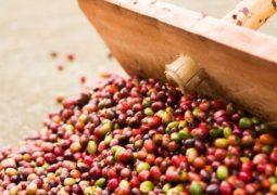 Setor de café do Brasil vê fim da perspectiva de 'supersafra' em 2018 com clima seco