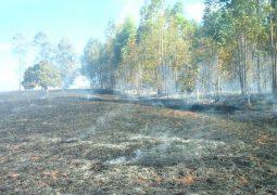 Incêndio consome cerca 400 hectares de vegetação e deixa rastro de destruição em Patos de Minas