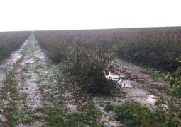 Chuva de granizo causa prejuízo de milhões de reais a produtores rurais em Rio Paranaíba