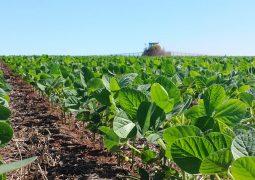 Plantio da safra de soja 2017/18 já chega a 85,6% da área prevista