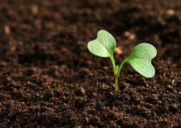 O papel dos micronutrientes e elementos traço na nutrição vegetal