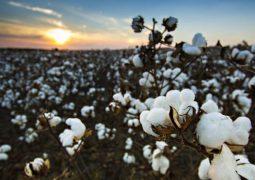 Start-ups do agronegócio crescem 70% ao ano no Brasil