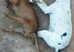 Caso de cachorros encontrados mortos em Rio Paranaíba intrigam a população